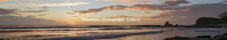 Nipponia photograph Gallery